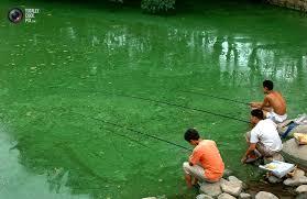 ChineseToxic Fishing