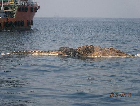 Giant Unknown Sea Creature