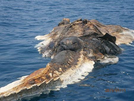 Real giant sea creatures - photo#4