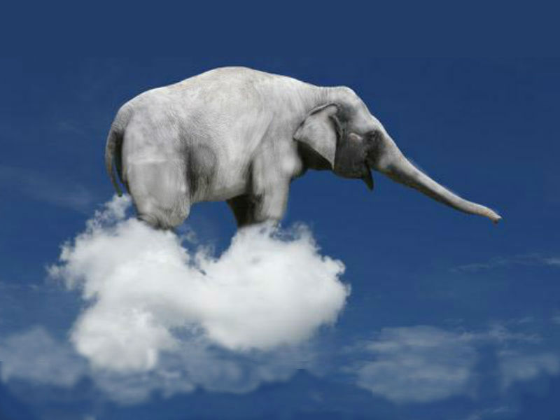 [Image: white-elephant-in-the-sky2.jpg?w=800]